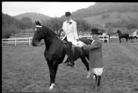 Horse Show Winner Kala King